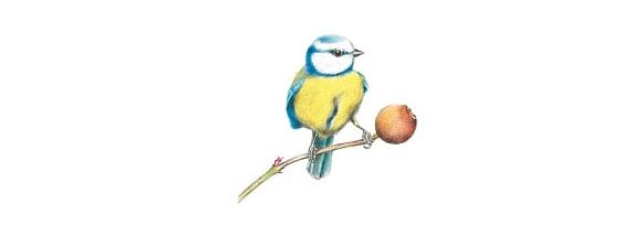 L'oiseau blessé